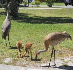 Crane Family Having Luncheon