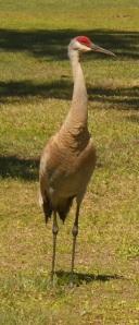 Mama Crane