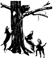Coon Dogs Treeing Art for Pinterest