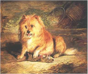 Vixen, 1824, Edwin Henry Landseer. Oil on panel. Collection Ruth Havemeyer Norwood. DOG PAINTING: The European Breeds, William Secord, 2000.