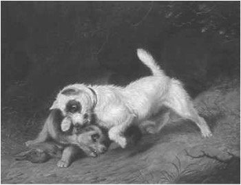 Terriers Fighting Over a Rabbit, Martin T. Ward (1799-1874), oil on canvas. Collection AKC. A BREED APART: The Art Collections of the American Kennel Club and the American Kennel Club Museum of the Dog, William Secord, 1988.