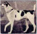 Viper, by Sartorius, 1796. Catalogue, temporary exhibit of The Kennel Club Art Gallery.