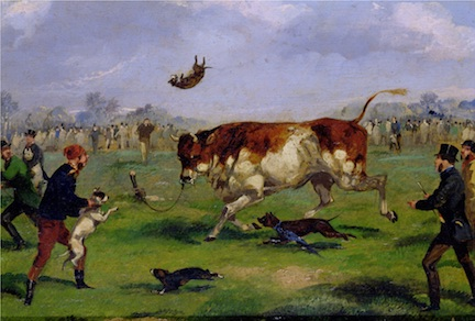PFA109529 Bull Baiting (oil on paper laid on panel) by Alken, Samuel Henry (1810-94); 17.8x26 cm; Private Collection; Photo © Bonhams, London, UK; English, out of copyright